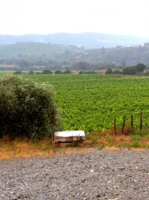 Vignes de fornelli sous la pluie